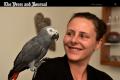 Szkocja: Mówiąca po polsku papuga odnalazła swój dom [wideo]