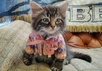 2016/10/cute-animals-wearing-tiny-sweaters-1-57ff4f6925de7__605.jpg