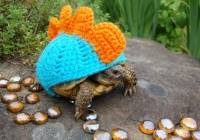 2016/10/cute-animals-wearing-tiny-sweaters-16-57ff4f9a2a4f8__605.jpg