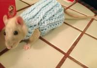 2016/10/cute-animals-wearing-tiny-sweaters-76-5804c59cc5572__605.jpg