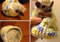 2016/10/cute-animals-wearing-tiny-sweaters-85-5804d7834c9c8__605.jpg