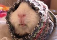 2016/10/cute-animals-wearing-tiny-sweaters-88-5804e039183fe__605.jpg