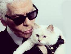 Kocie życie jak z bajki, czyli najbogatsza kotka na świecie zarabia krocie!