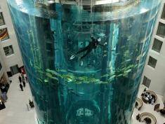 BERLIN - MARCH 22:  A diver cleans the glass of a giant, cylindrical aquarium as fish swim by at the AquaDom on March 22, 2010 in Berlin, Germany. The 25 meters tall aquarium, which contains approximately 1,500 fish from 50 different species, stands in the lobby of the SAS Radission Hotel and is part of the SeaLife Berlin underwater attraction.  (Photo by Sean Gallup/Getty Images)