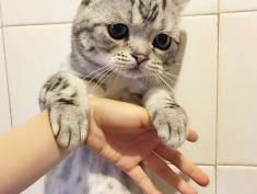 Ta śliczna kotka ze smutnym spojrzeniem podbija sieć!