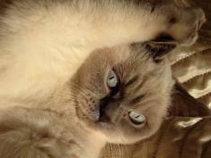 "Koci konkurs ""Mam kota na punkcie kota"" – wyniki!"