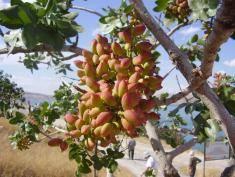 Wiesz co to za owoc? My wiemy, jak rosną egzotyczne rośliny
