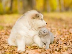 Pies kontra kot. Kto kocha nas bardziej?