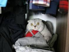 """Jak wołasz swojego kota: """"kici kici"""" czy """"pis pis pis""""?"""