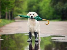 Nie pozwól swojemu zwierzakowi zmoknąć, kup mu parasol!