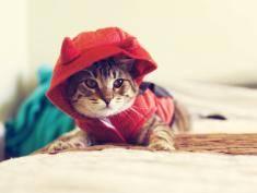 Oto najlepsze pomysły, jak przebrać kota na Halloween