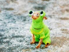 Te zwierzaki już przygotowują się do zimy, zobacz słodkie zdjęcia!