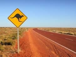 Jakie zwierze może trzymać w domu Australijczyk? [wideo]