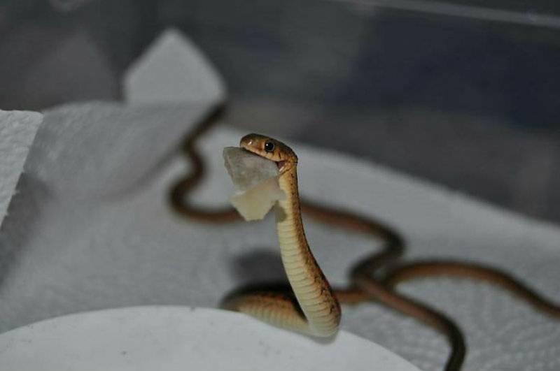 Nie lubisz węży? Te zdjęcia sprawią, że polubisz!