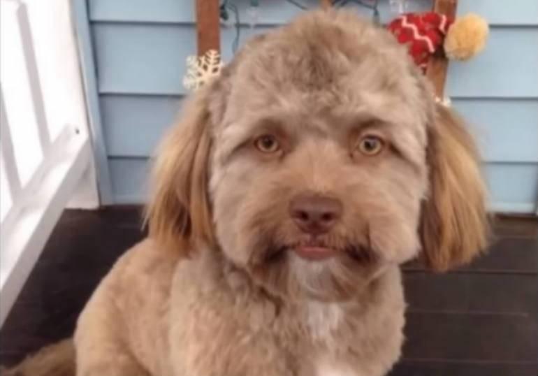 Ten pies ma ludzką twarz!