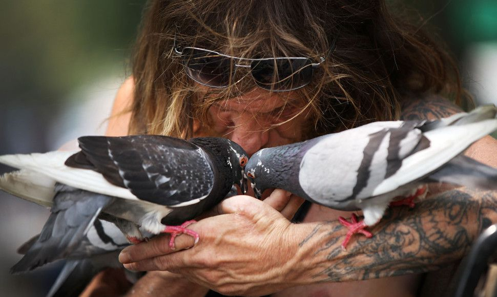 NEW YORK, NY - JUNE 12:  Larry, a bird enthusiast, kisses pigeons in Washington Square Park on a hot day in Manhattan on June 12, 2015 in New York City. Temperatures in New York City and much of the Northeast rose near 90 degrees, the second consecutive hot day of the year after a bitterly cold winter.  (Photo by Spencer Platt/Getty Images)